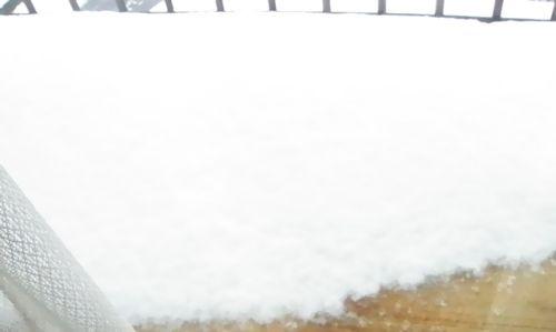 10年ぶりの大雪 (1)