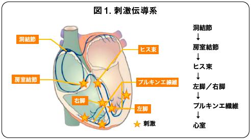 心臓 電気