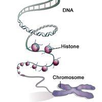 Figure-1-Histones-1024x1022.jpg
