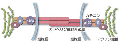 fig11_03.jpg