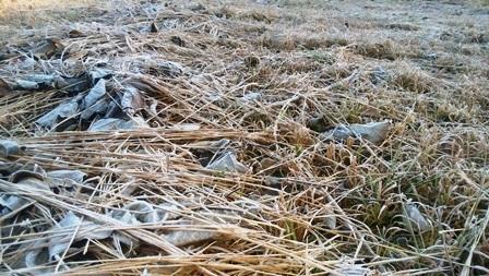 大月の畑凍るweb