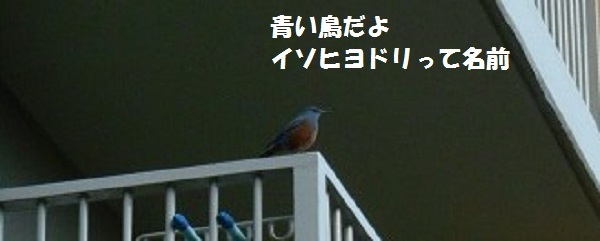 DSCN2448.jpg