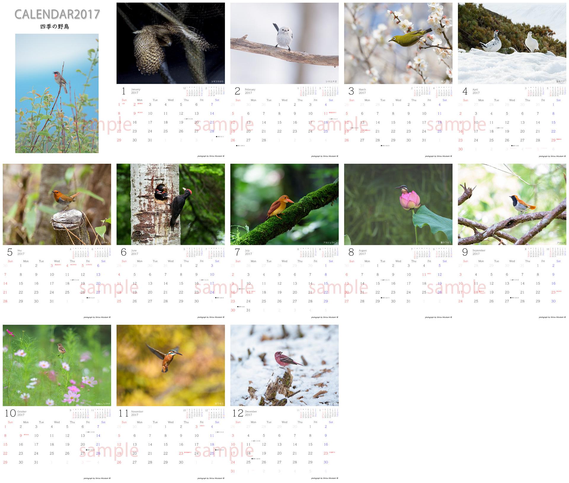 四季の野鳥web版