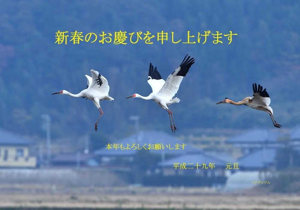 ソデグロヅル