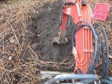 カライモ掘り