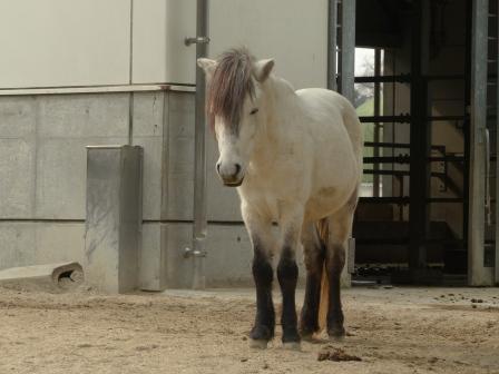 野間馬 1
