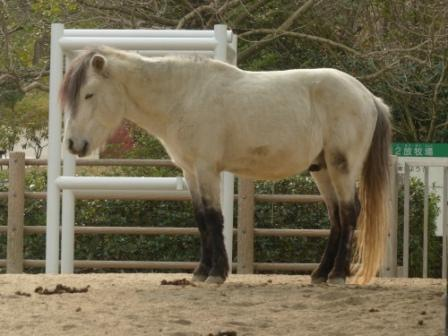 野間馬 2