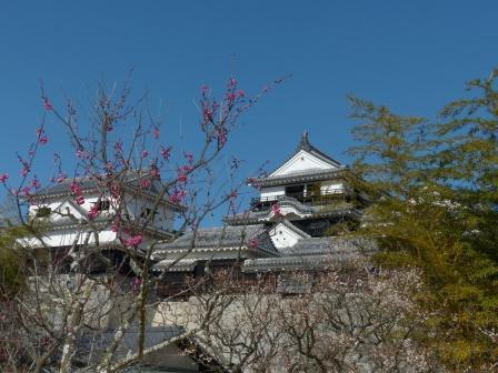 松山城 天守閣 と 梅 1