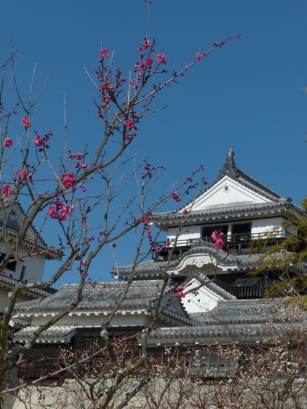 松山城 天守閣 と 梅 2
