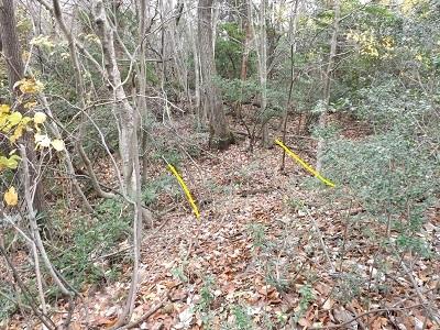 栃川茶臼山城跡の踏査2016年11月30日 (5)