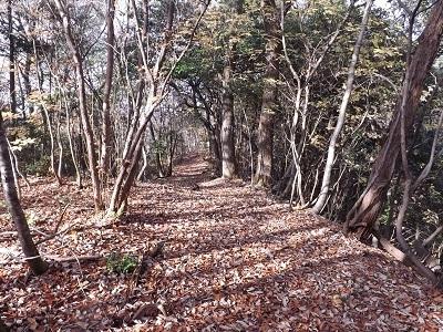 福井市牛若城の踏査2016年12月2日 (3)