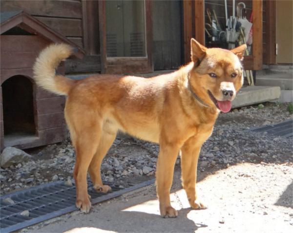 小型犬、中型犬、大型犬の基準って何?大きさや体重の目安_3