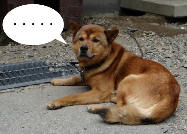 <なぞなぞ>まったく吠えないおとなしい犬って何色?_1