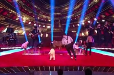 The Olate Dogs Finals - America got talent - AGT 2012