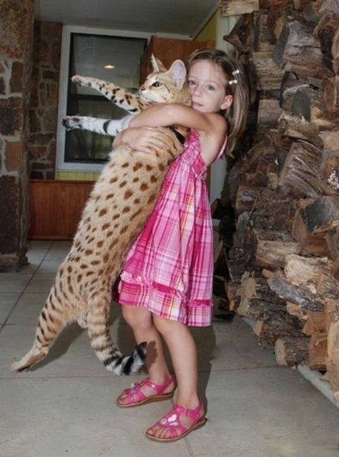 catプロレスの練習