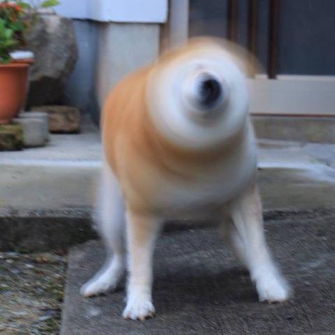 dogドリル