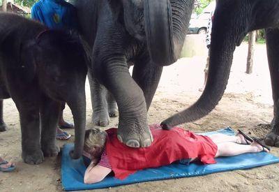 Elephant Massage in Phuket Thailand