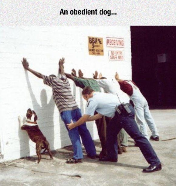 取り調べの犬