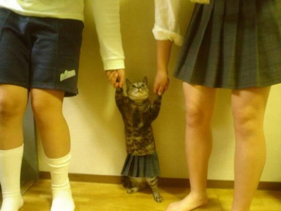 cat地球人に捉えられた猫