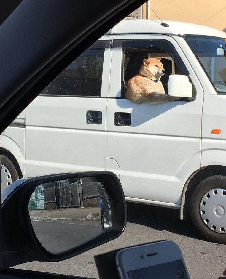 dogドライバー