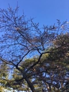 竹駒神社梅