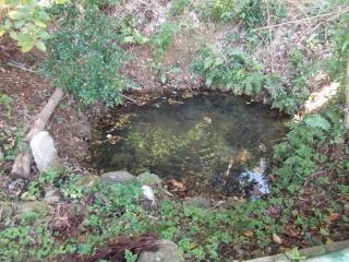 観音寺水汲ノ池