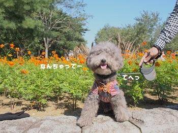 ひたち海浜公園20161015-4
