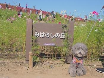 ひたち海浜公園20161015-10