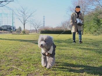 2016年お散歩納め-1