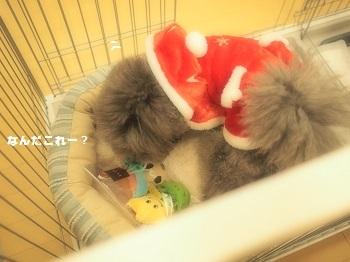 クリスマスプレゼント2016-2