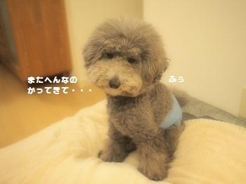 ジジさんのはらまき-2