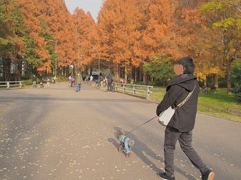 水元公園20161204-2