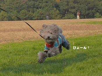 水元公園20161204-6