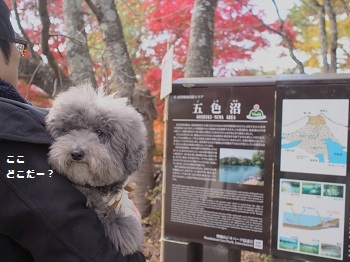 五色沼20161102-1