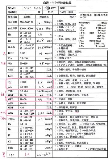 ジジ血液検査20161225