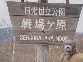 栃木旅行さんぽ20160416-1