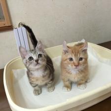 懐っこい可愛い猫ちゃんたちに囲まれてお掃除全般のお仕事してみませんか?