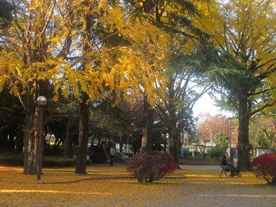 千葉公園の銀杏