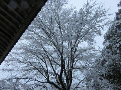 20161219初雪2s