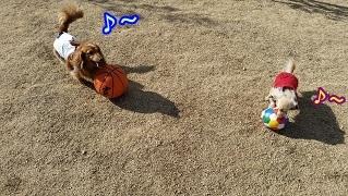 楽しいボール遊び