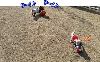 続:ボール遊び
