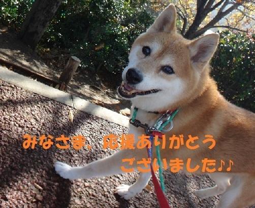 201611_26_12_f0121712_15171828.jpg