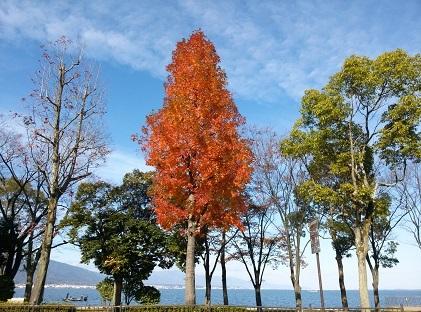 琵琶湖畔161202