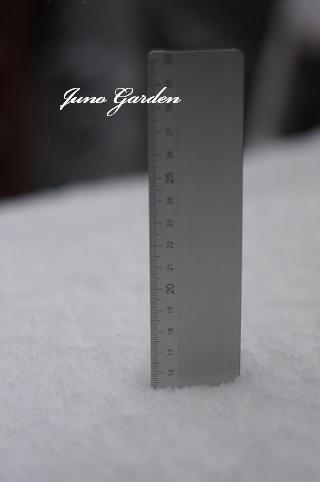 15センチ0115