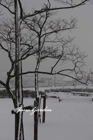 湖畔雪170115