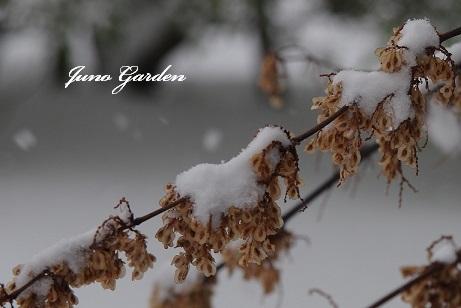雪葉170115