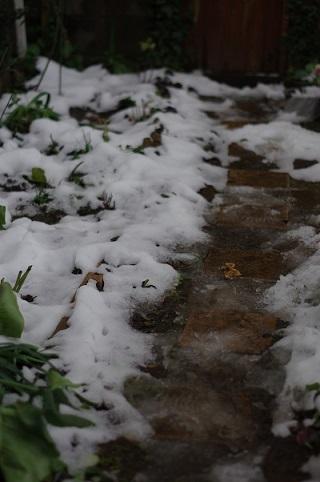 通路の雪0117