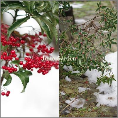 庭さきの雪170229