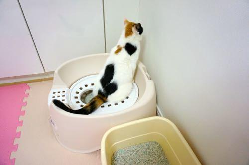 れいトイレ