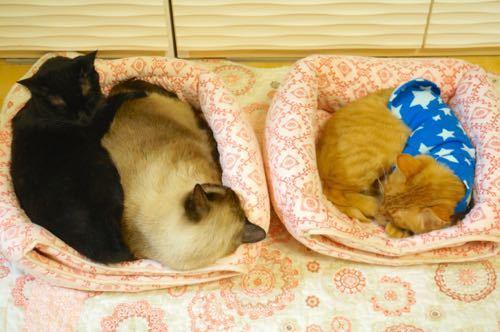 猫ベッド3にゃん